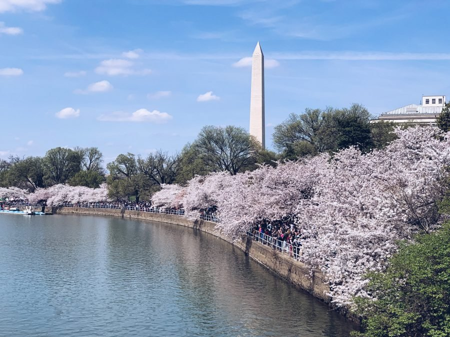 Washington DC Cherry Blossom Festival