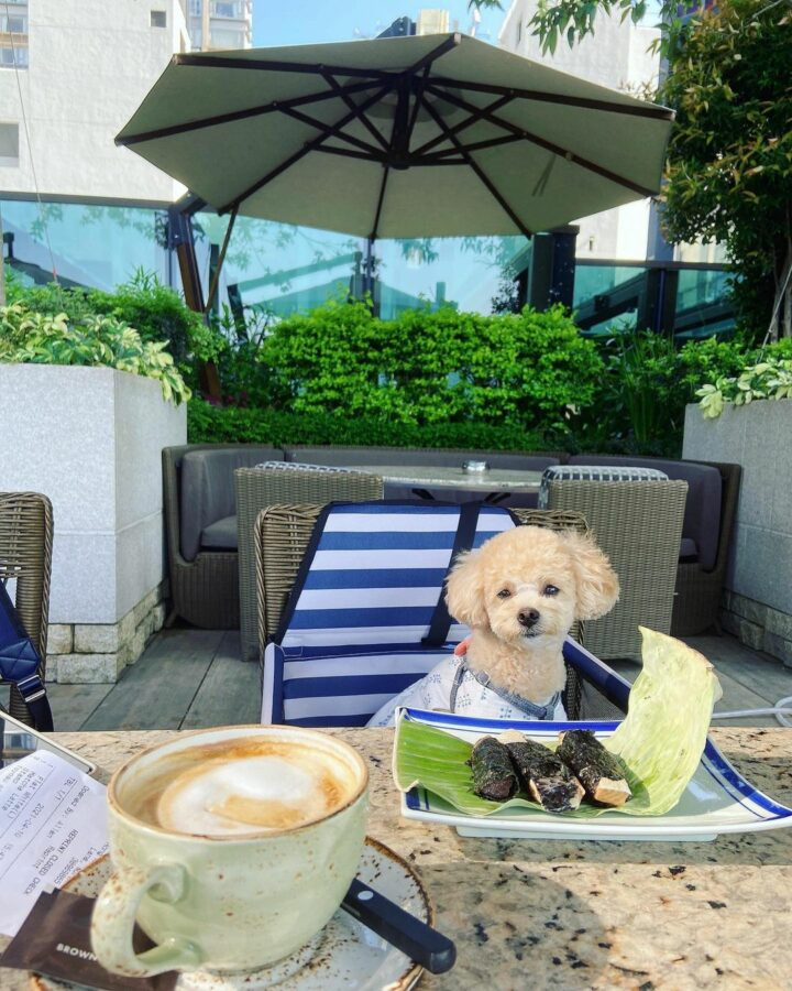 A Dog Sitting At A Table  Description Automatically Generated With Medium Confidence