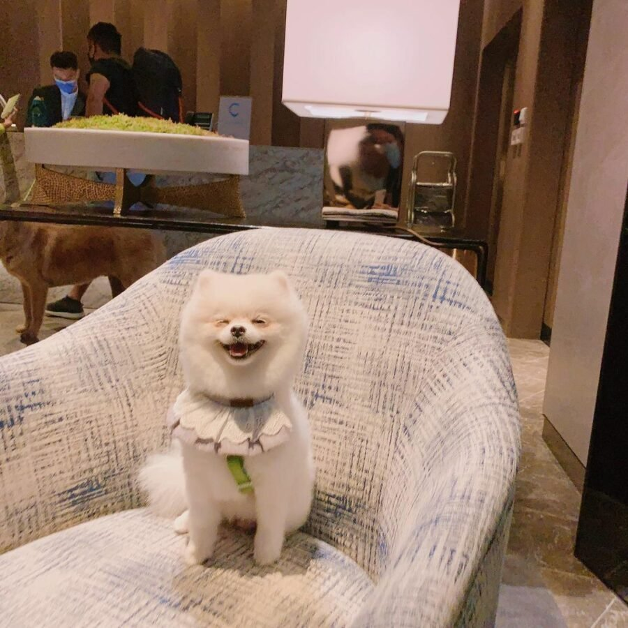 A Dog Sitting On A Couch  Description Automatically Generated