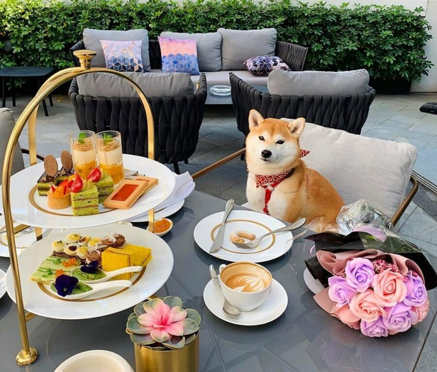 A Dog Sitting At A Table With Food And Drinks On It  Description Automatically Generated With Medium Confidence