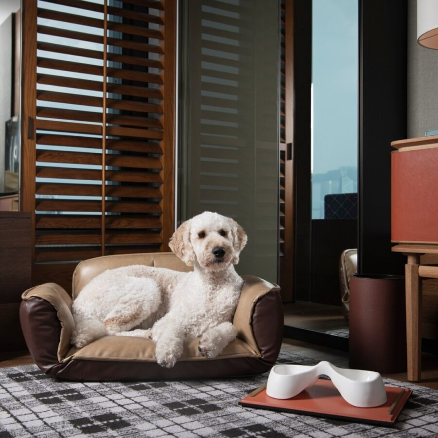 A Dog Sitting On A Chair  Description Automatically Generated With Medium Confidence