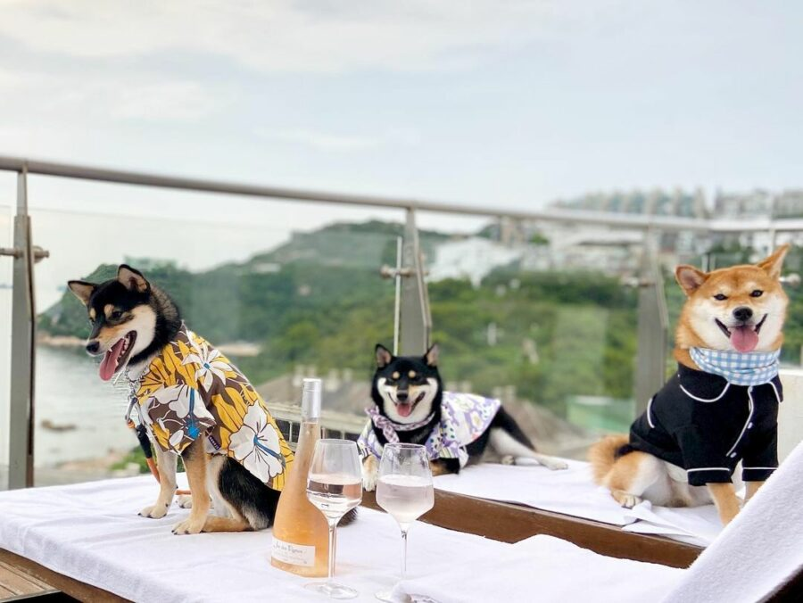 Dogs Sitting At A Table  Description Automatically Generated With Low Confidence