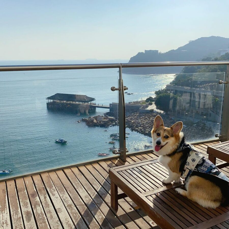 A Dog Sitting On A Deck Overlooking A Body Of Water  Description Automatically Generated With Medium Confidence